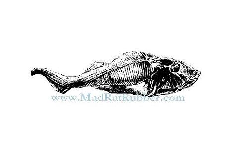 V627 Cephalaspis Fossil Fish