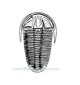 V626 Trilobite #2