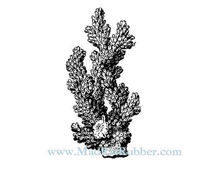 V633 Tree Coral