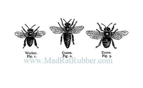 V586 Bee Trio Diagram