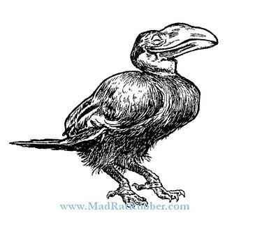 V661 Doug the Mystery Bird - Dodo?