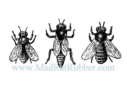 V581 Bee Trio A