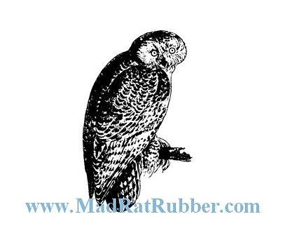 V648 Sitting Owl