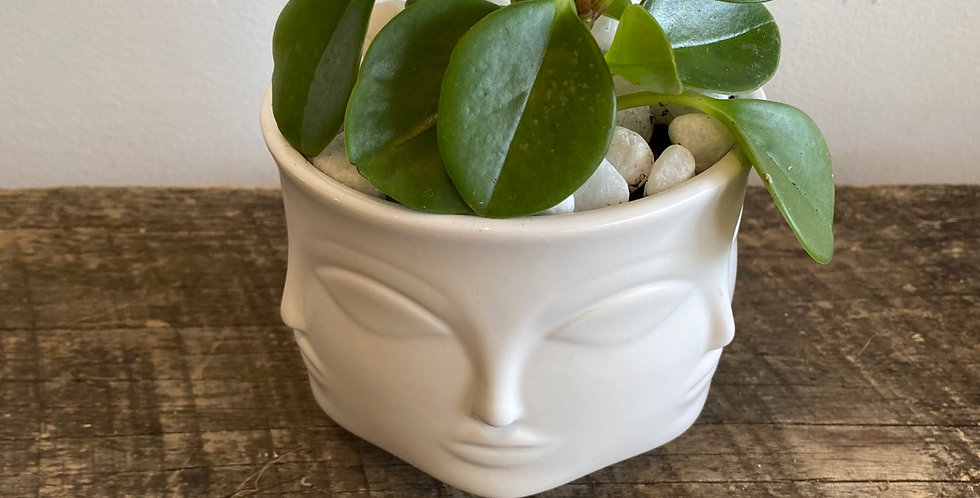 Potted Plant -  Peperomia in Face Pot