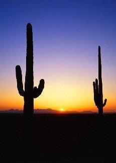 Tucson, AZ - March 7-8, 2020