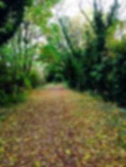 Felley woods in Autumn