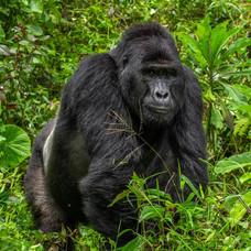 Uganda y Ruanda