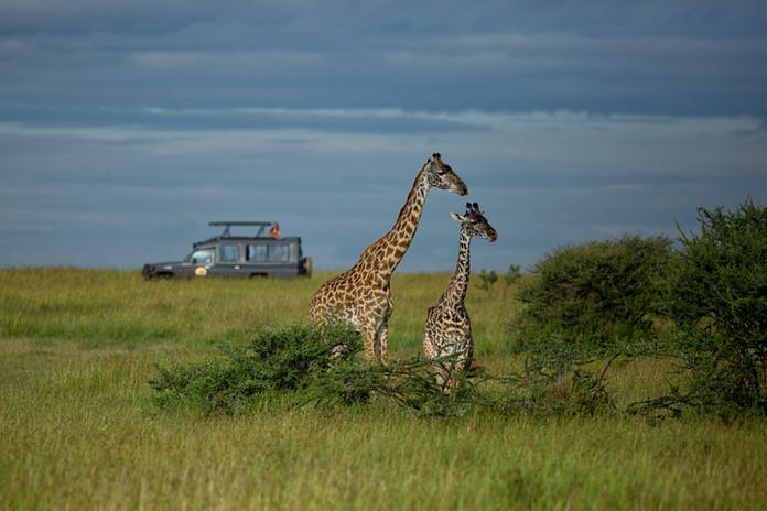 Safari en Kenia y Tanzania