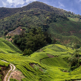 Kuala Lumpur y visita a zona de montañas