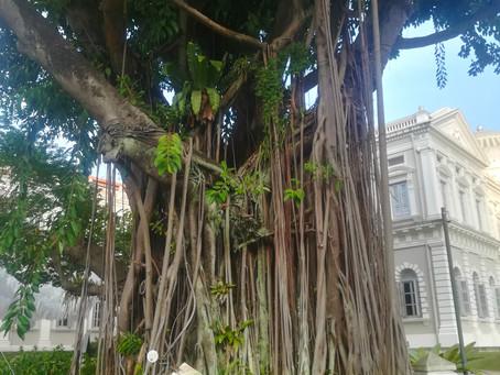 Niet lullen maar planten! (Singapore deel 2)