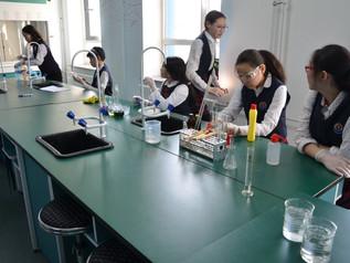 Science fair has organized