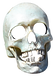 kisspng-skull-transparency-and-transluce
