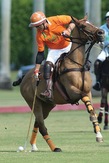 Horseplay8.jpg