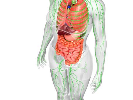 Conhecendo o Sistema linfático