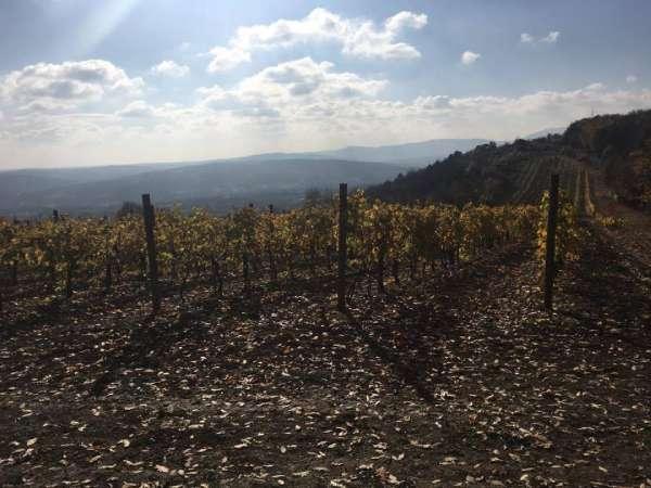 King-Peter-s-Wineyards