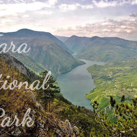 5 reasons that will make you fall in love with Tara National Park