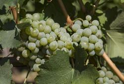 Winery-Rodovanovic-sumadija