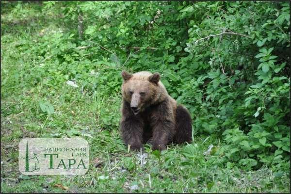NP-Tara-bear-watching