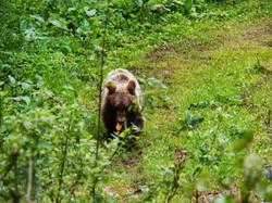 National-park-Tara-bear-watching