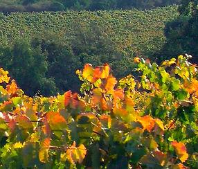 icono vinos.jpg