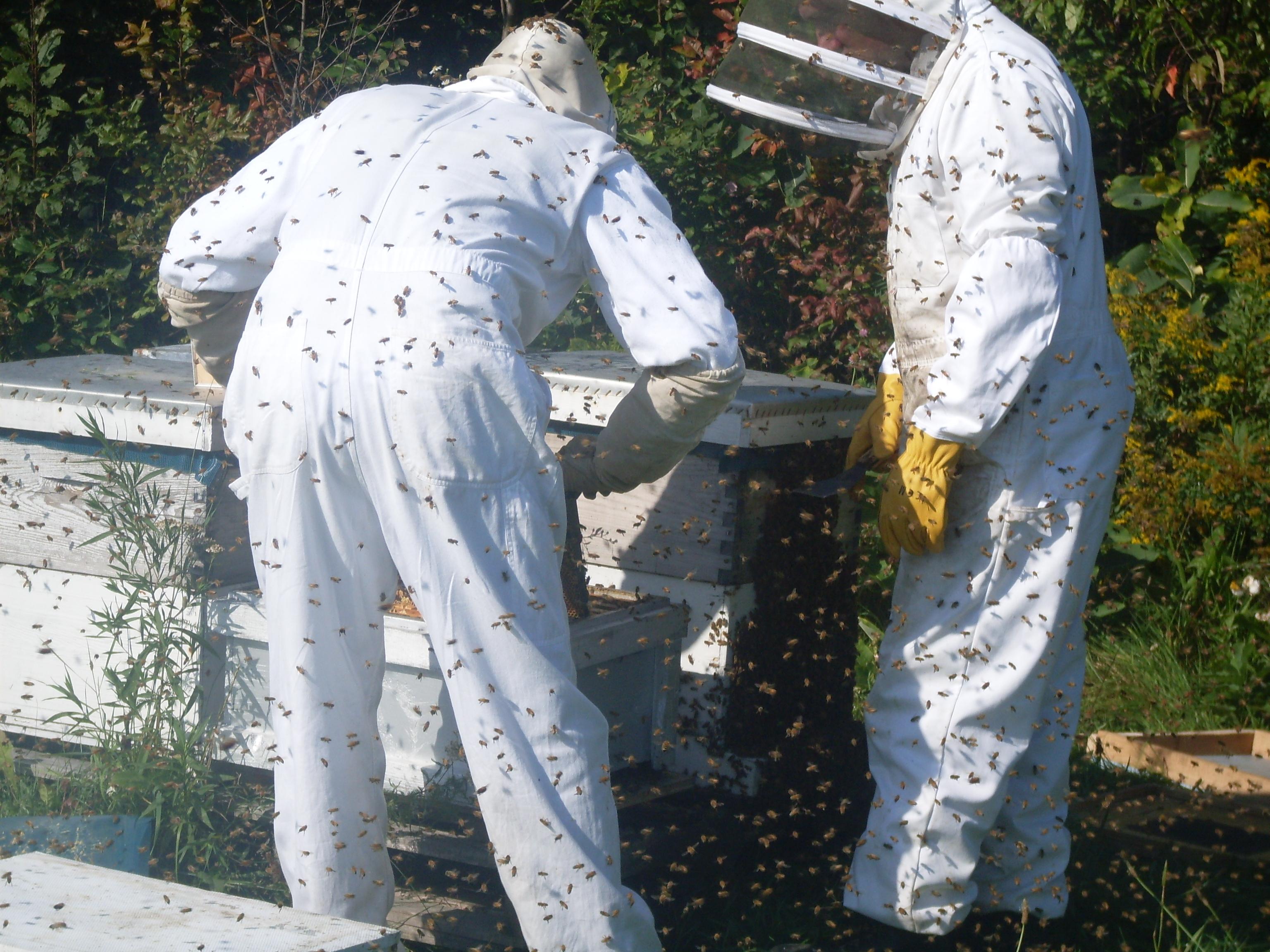 Miel pur délice - Ruches et abeilles