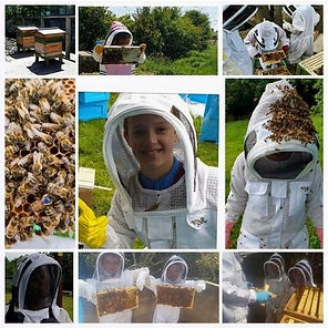 Beekeeping%20Experience%20with%20More%20