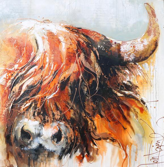 golden beef 48 x 48