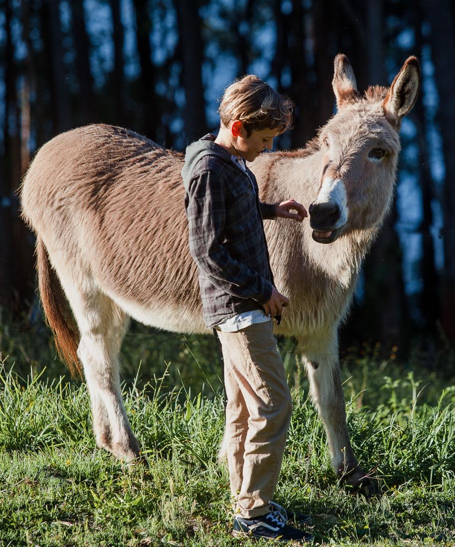 boy & donkey