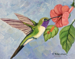 Hummingbird Series IV