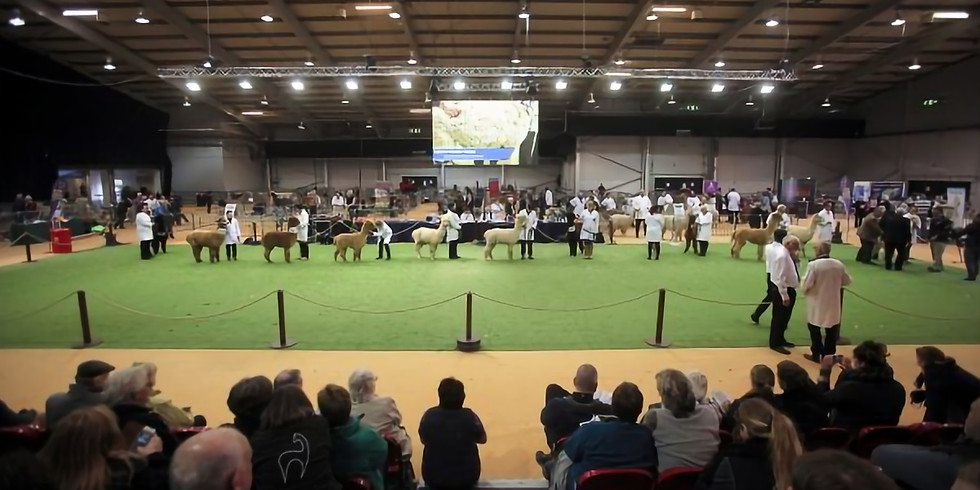 The British Alpaca Society National Show
