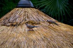 birding (6)