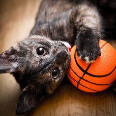 kitten basketball.jpg