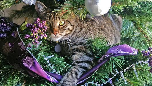 cat in tree.jpg