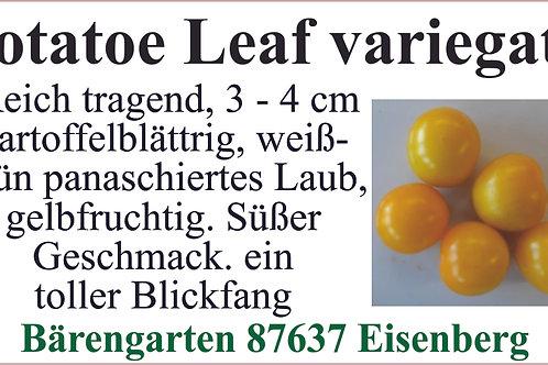 Tomaten klein - Potatoe leaf variegata
