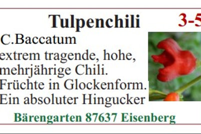 Chilisamen - Tulpenchili