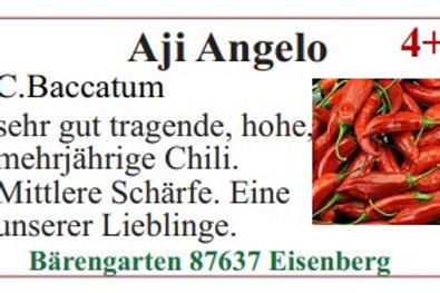 Chilisamen - Aji Angelo
