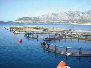 Εγκρίθηκε από την Ευρωπαϊκή Επιτροπή το ελληνικό Επιχειρησιακό Πρόγραμμα Αλιείας και Θάλασσας (ΕΠΑλΘ