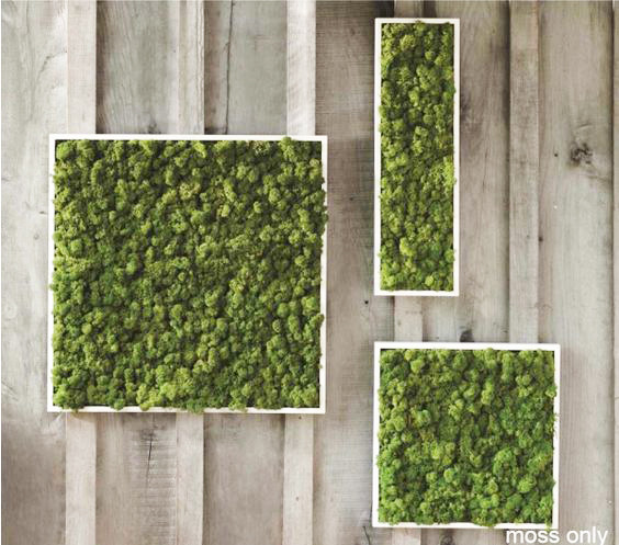 Preserved Moss Panels trio