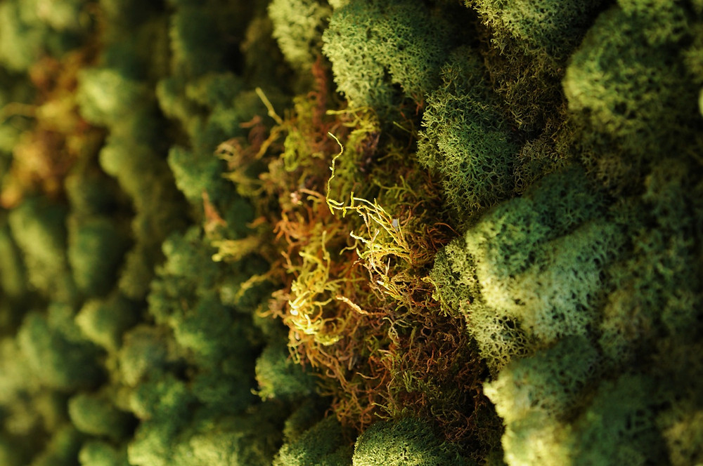 Assorted Mosses & Lichens close-up