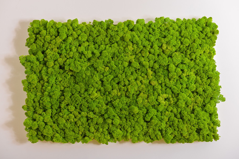 Preserved Moss Panel.