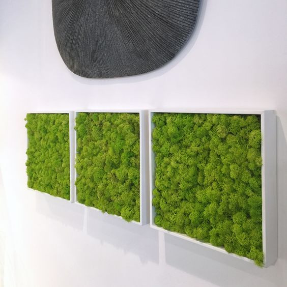 Preserved Moss Panel trio, art.