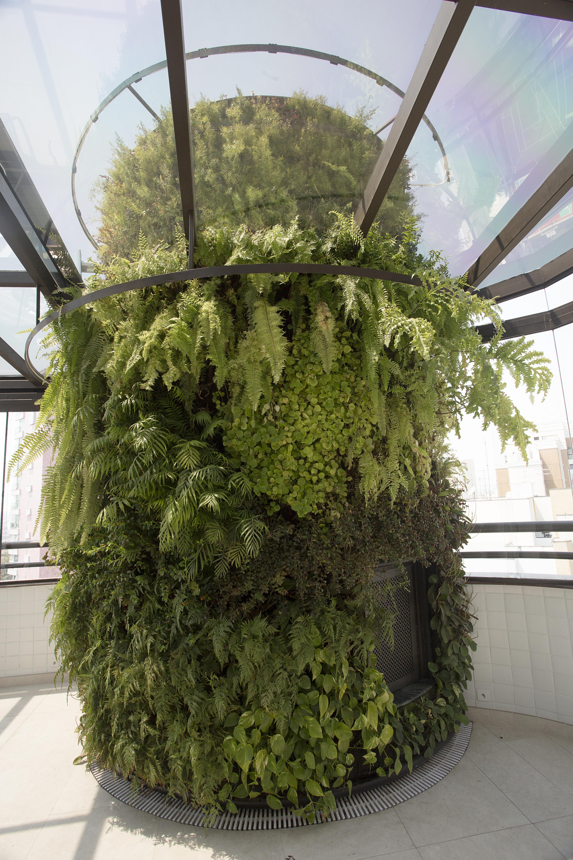Natural Vertical Garden - interior 04