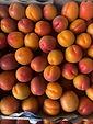 Apricots Greek Origin