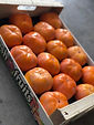 Top Quality Fresh Persimmon