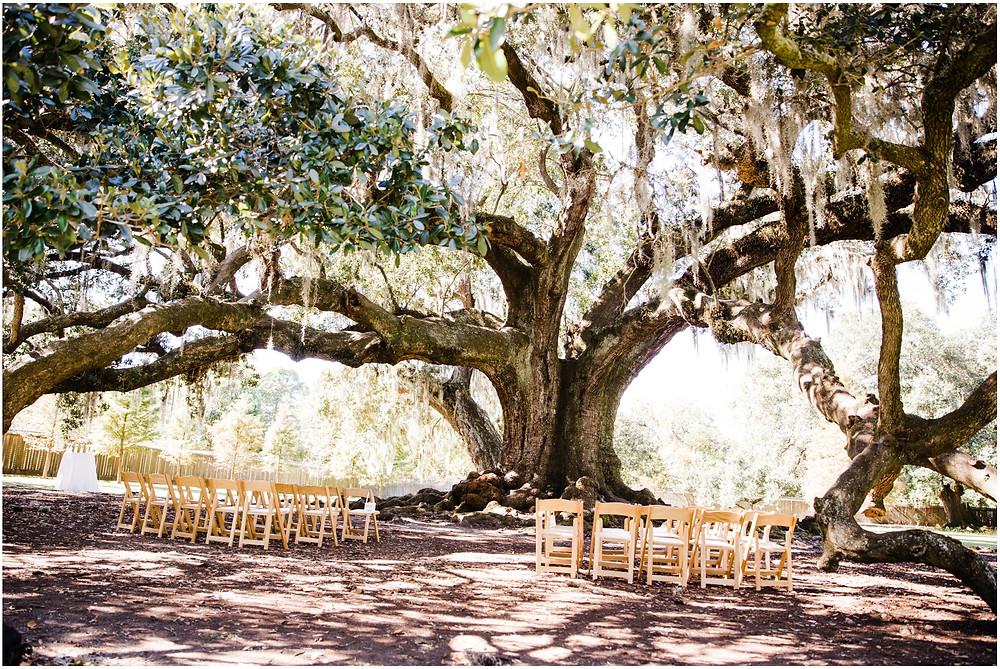 Tree-of-Life- Audubon Park