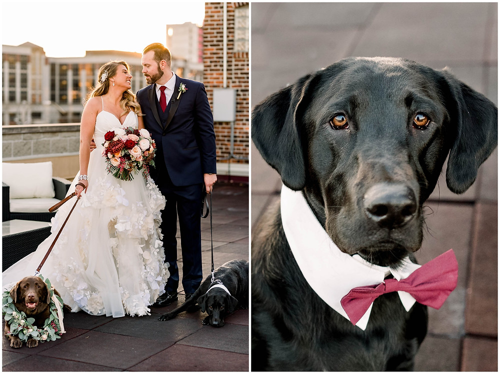 Dog-at-wedding