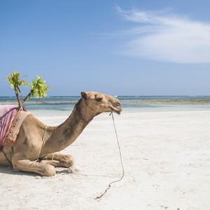 Camel Wedding Crashers | Swahili Beach Resort | Kenya