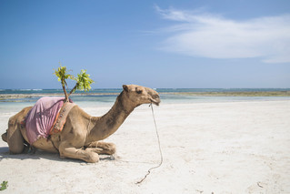 Camel Wedding Crashers | Swahili Beach Resort | Kenya