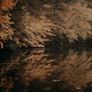 Hidden Forest Engagement Session | Atlanta USA