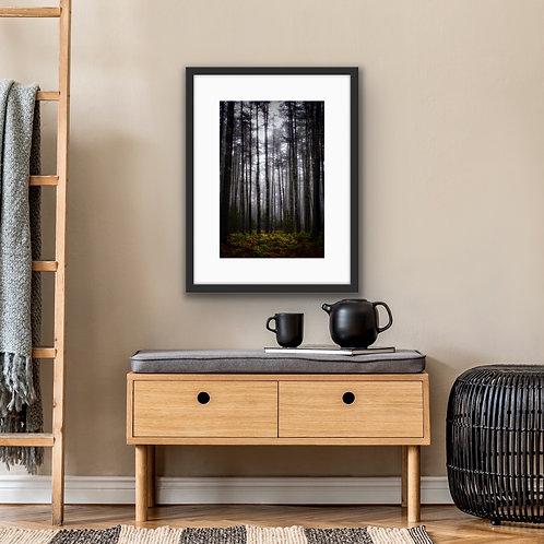 Tall Dark Pines